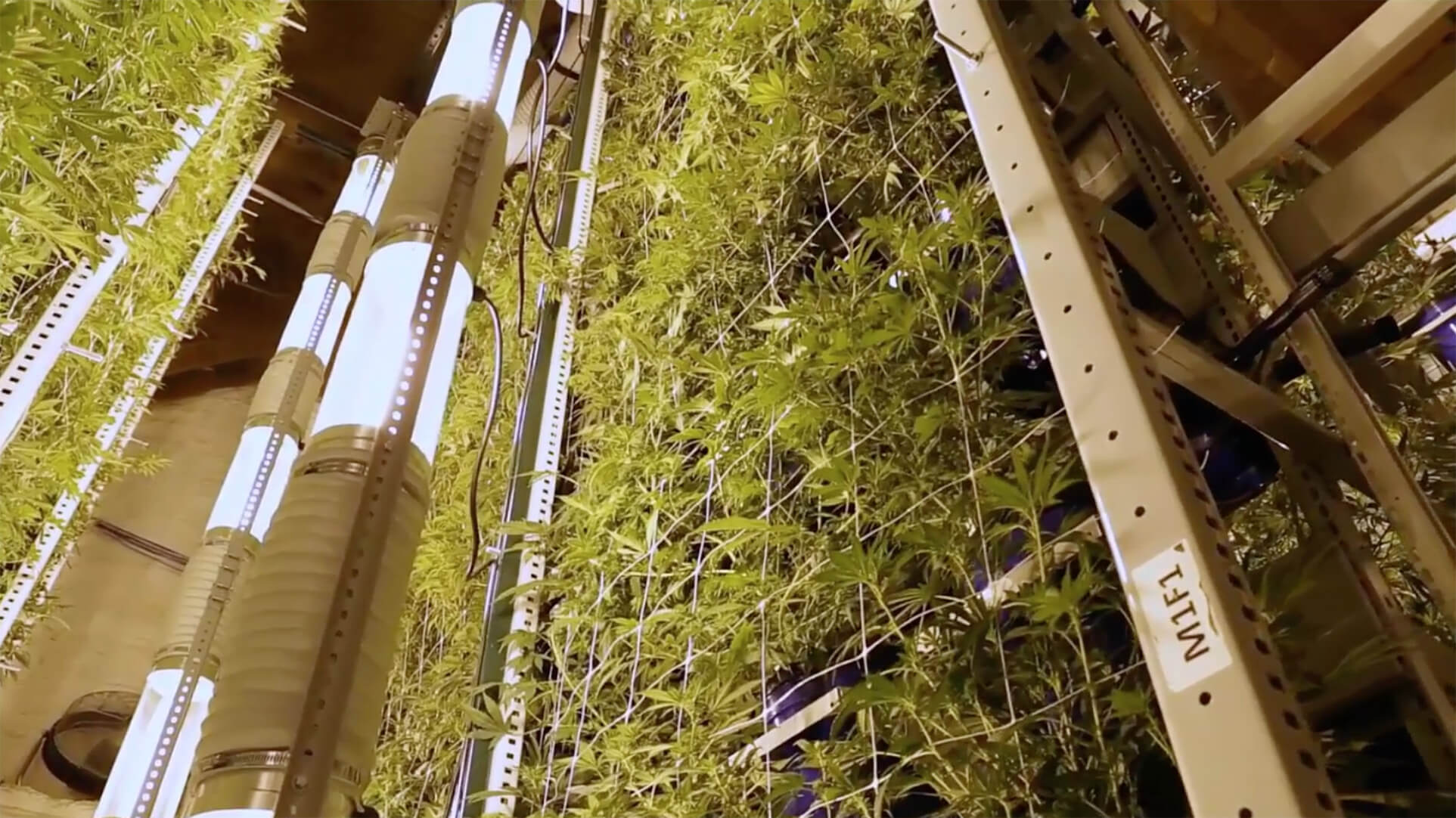 Vertical Growing: A Spatial Gardening Technique | Cannabis Industry ...