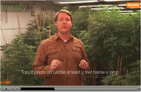 Introduction to Cannabis Growing Course
